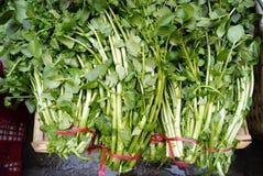 кресс-салат Стоковые Фото