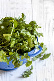 Кресс-салат в дуршлаге над белой предпосылкой тимберса Стоковое Изображение RF