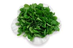 кресс-салат зеленого салата травы предпосылки Стоковое Изображение RF