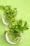 Кресс-салат стоковая фотография