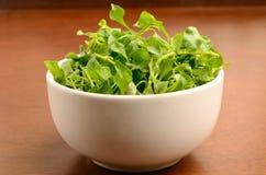 Кресс-салат стоковое фото