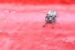 Крестоносец паука на красной предпосылке стоковое изображение