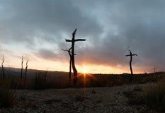 Кресты в лесе стоковое изображение rf