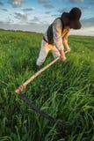 Крестьянин косит траву в поле стоковое изображение rf