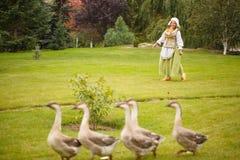 Крестьянская женщина пасет гусынь на луге Стоковые Фотографии RF
