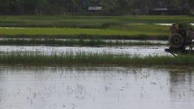Крестьянский плужок его рисовые поля видеоматериал
