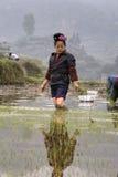Крестьянское положение женщины лодыжк-глубокой грязи, в среднем ricefield стоковое изображение rf
