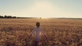 Крест девушки воздушного фотографирования идущий пшеничное поле на заходе солнца Замедленное движение, высокоскоростная камера сток-видео