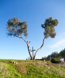 Крест Serra в Вентуре Калифорнии между деревьями Стоковая Фотография