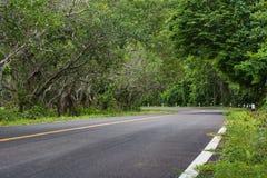 Кривая дороги с зеленым тоннелем дерева стоковые фото