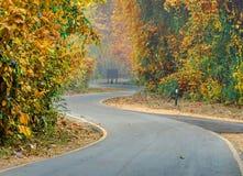 кривая красочной дороги в лесе Стоковое фото RF