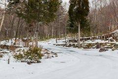 Кривая дороги в лесе, покрытом с снегом Стоковая Фотография