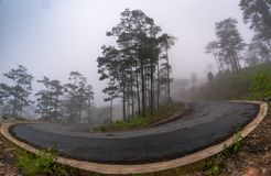 Кривые в лесе стоковые изображения rf