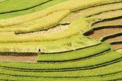 Кривые его террасы риса Стоковые Фотографии RF