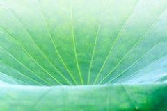 Кривые и текстура лист лотоса Стоковое Фото