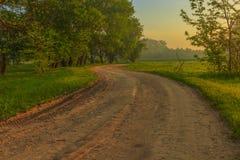 Кривые дорог леса Стоковые Изображения RF