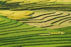 Кривые террасных полей Стоковая Фотография RF
