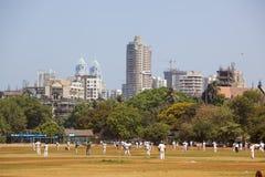 Крикет Стоковая Фотография