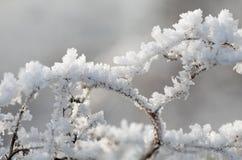 кристаллический льдед Стоковое Изображение RF