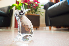 Кристаллическая украшая лягушка Kickknakery стоковые фотографии rf
