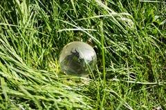 Кристаллический глобус в плотной траве Стоковые Фото