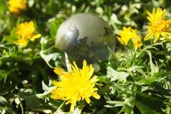 Кристаллический глобус среди одуванчиков Стоковое фото RF