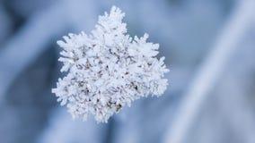 Кристаллы изморози Стоковое Изображение