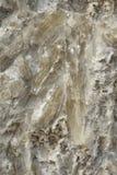 Кристаллы селенита гипса Стоковые Изображения