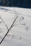 Кристаллы снега на ветвях дерева Стоковые Изображения