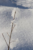 Кристаллы снега на ветвях дерева Стоковая Фотография RF