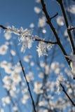 Кристаллы снега на ветвях дерева стоковые фотографии rf
