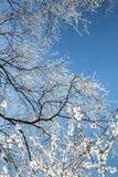 Кристаллы снега на ветвях дерева стоковое изображение