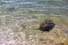 Кристл - ясная морская вода и превосходное чистое, видит утесы на дне океана природы моря, под водой в ясности пляжа и очищает, w стоковое изображение rf