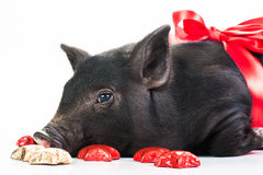 Кристмас piggy Стоковое фото RF
