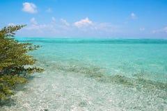 Кристл - ясная вода бирюзы на тропическом мальдивском пляже Стоковое Изображение