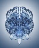 Кристл - ясный ум Стоковые Фотографии RF