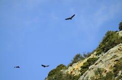 Крит Греция приземлился продолжающееся солнце лучей плоскости Стоковые Изображения RF