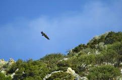 Крит Греция приземлился продолжающееся солнце лучей плоскости Стоковые Фотографии RF