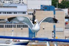Кричащая чайка сидя на поручне парома Стоковые Фото