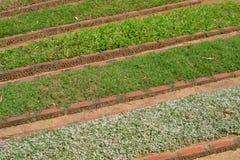 Кровати с травами - 3940 Стоковое Изображение