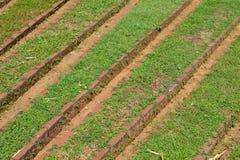 Кровати с травами - 3943 Стоковое фото RF