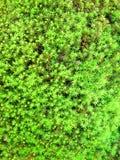 Кровать зеленого мха Стоковые Изображения RF