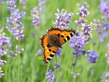 Кровать и бабочки лаванды Стоковые Фото