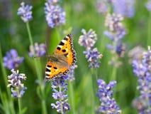 Кровать и бабочки лаванды Стоковое Изображение