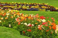 Кровать красочного Popies Стоковые Фото