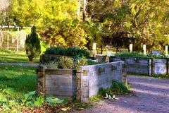 Кровать сада деревянная Стоковые Фото