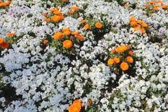 Кровать цветков в парке Yamashita Стоковое Фото