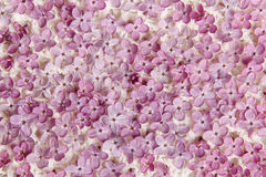 Кровать цветков сирени Стоковое фото RF