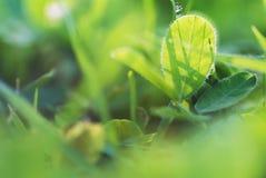 Кровать цветков Стоковая Фотография