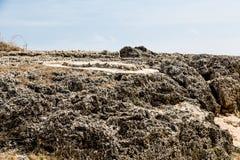 Кровать черного коралла Стоковые Фотографии RF